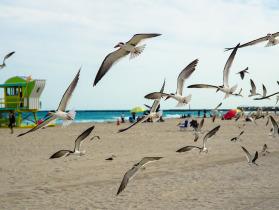 Playas famosas de miami temperatura clima lo mejor